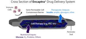 Graphic showing ViaCyte encapsulated cell therapy for Type 1 diabetes clinical trials